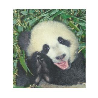 Panda cub, Wolong, Sichuan, China Notepad