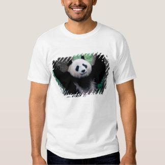 Panda cub, Wolong, Sichuan, China T Shirts