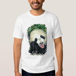 Panda cub, Wolong, Sichuan, China Tee Shirt