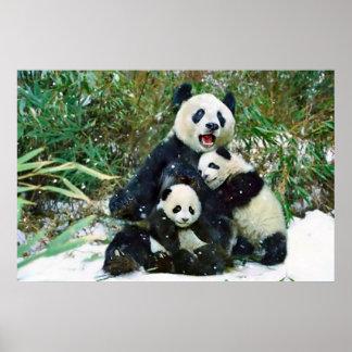 Panda cubs poster