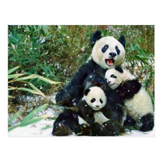 Panda de la madre tarjetas postales