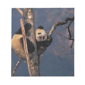 Panda del bebé que juega en el árbol, Wolong, Sich Libretas Para Notas