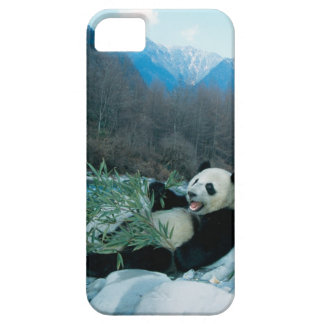 Panda eating bamboo by river bank, Wolong, 2 iPhone 5 Case