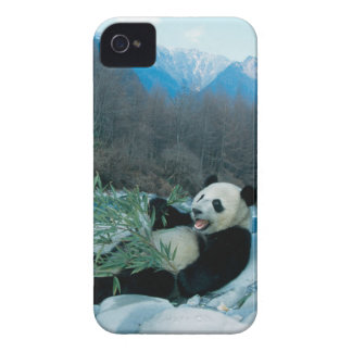 Panda eating bamboo by river bank, Wolong, 2 iPhone 4 Case