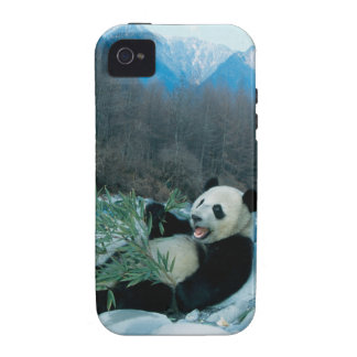 Panda eating bamboo by river bank, Wolong, 2 iPhone 4 Covers