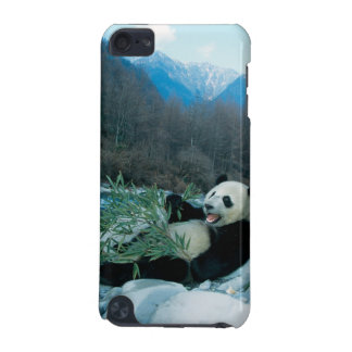 Panda eating bamboo by river bank, Wolong, 2 iPod Touch (5th Generation) Cover