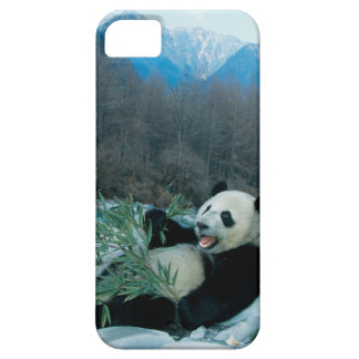 Panda eating bamboo by river bank, Wolong, 2 iPhone 5 Covers