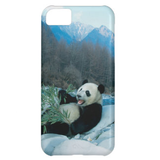 Panda eating bamboo by river bank, Wolong, 2 iPhone 5C Case