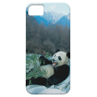 Panda eating bamboo by river bank, Wolong, 2 iPhone 5 Cover