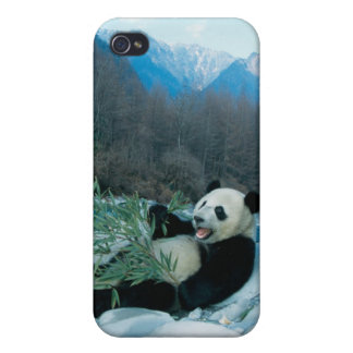 Panda eating bamboo by river bank, Wolong, 2 Cases For iPhone 4