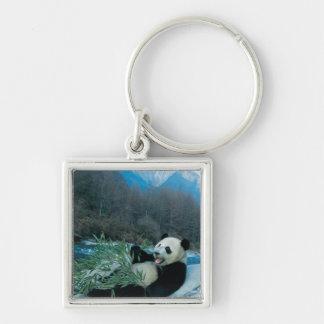Panda eating bamboo by river bank, Wolong, 2 Keychain