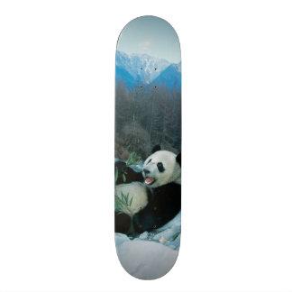 Panda eating bamboo by river bank, Wolong, 2 Skateboards