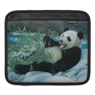 Panda eating bamboo by river bank, Wolong, 2 Sleeve For iPads