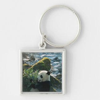 Panda eating bamboo by river bank, Wolong, 3 Keychain