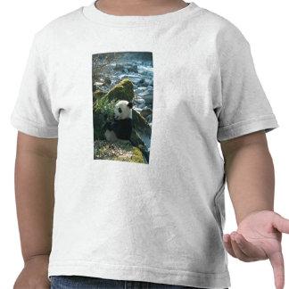 Panda eating bamboo by river bank, Wolong, 3 T Shirts