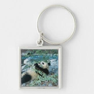 Panda eating bamboo by river bank, Wolong, Keychain