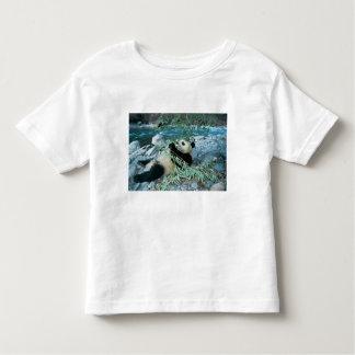 Panda eating bamboo by river bank, Wolong, Tee Shirts