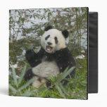 Panda eating bamboo on snow, Wolong, Sichuan, 2 3 Ring Binders