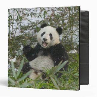 Panda eating bamboo on snow, Wolong, Sichuan, 2 Binder