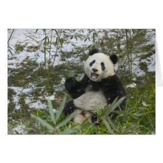 Panda eating bamboo on snow, Wolong, Sichuan, 2 Card