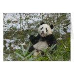 Panda eating bamboo on snow, Wolong, Sichuan, 2 Greeting Card