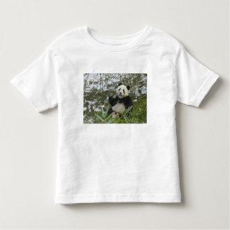 Panda eating bamboo on snow, Wolong, Sichuan, 2 Shirt
