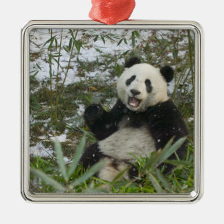 Panda eating bamboo on snow, Wolong, Sichuan, 2 Square Metal Christmas Ornament