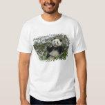 Panda eating bamboo on snow, Wolong, Sichuan, 2 T Shirts