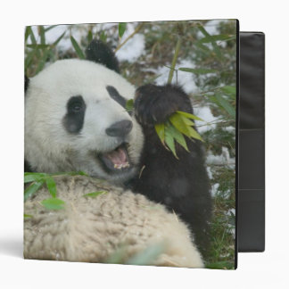 Panda eating bamboo on snow, Wolong, Sichuan, Binder