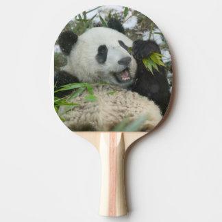 Panda eating bamboo on snow, Wolong, Sichuan, Ping Pong Paddle