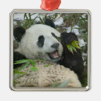 Panda eating bamboo on snow, Wolong, Sichuan, Square Metal Christmas Ornament