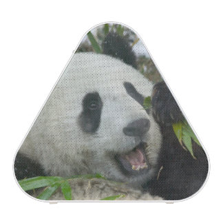 Panda eating bamboo on snow, Wolong, Sichuan, Speaker