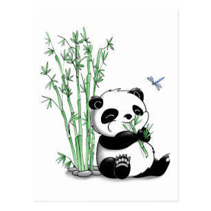 Panda Eating Bamboo Postcards Zazzle
