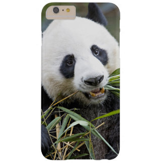 Panda eating bamboo shoots Alluropoda 2 Barely There iPhone 6 Plus Case