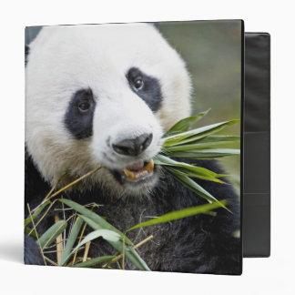 Panda eating bamboo shoots Alluropoda 2 Binder