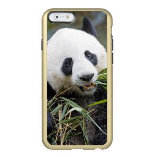 Panda eating bamboo shoots Alluropoda 2 Incipio Feather Shine iPhone 6 Case