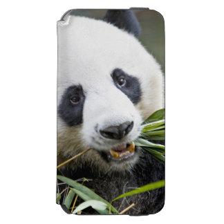 Panda eating bamboo shoots Alluropoda 2 iPhone 6/6s Wallet Case