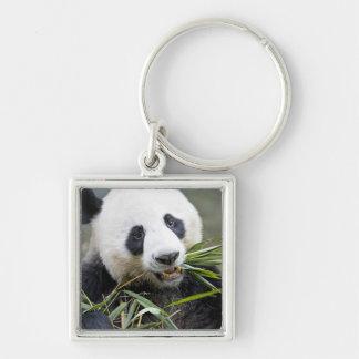 Panda eating bamboo shoots Alluropoda 2 Keychain