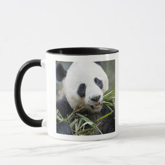 Panda eating bamboo shoots Alluropoda 2 Mug