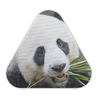 Panda eating bamboo shoots Alluropoda 2 Speaker