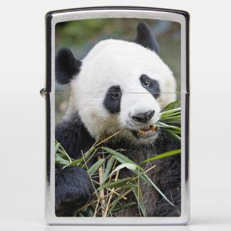 Panda eating bamboo shoots Alluropoda 2 Zippo Lighter