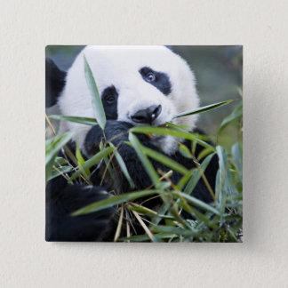 Panda eating bamboo shoots Alluropoda Button