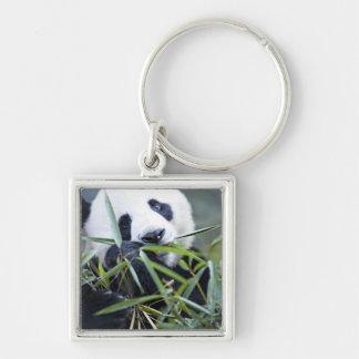 Panda eating bamboo shoots Alluropoda Keychain