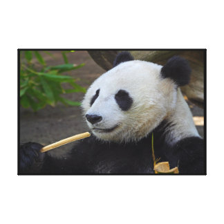 Panda eating bamboo tree Wrapped Canvas Print