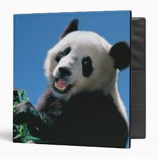Panda eating bamboo, Wolong, Sichuan, China Binder
