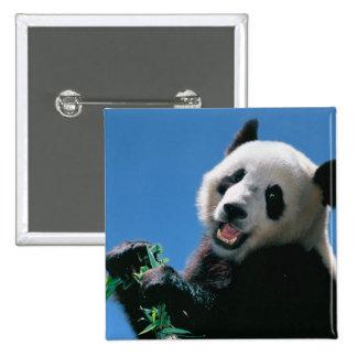 Panda eating bamboo, Wolong, Sichuan, China 2 Inch Square Button