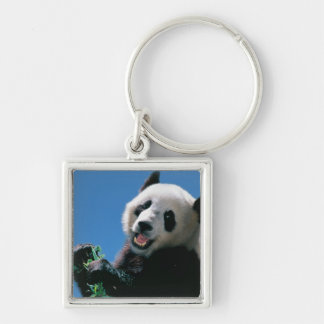 Panda eating bamboo, Wolong, Sichuan, China Keychain
