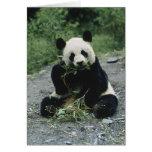 Panda Eating Greeting Cards