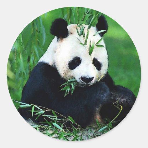 Panda Eating Leaves Classic Round Sticker