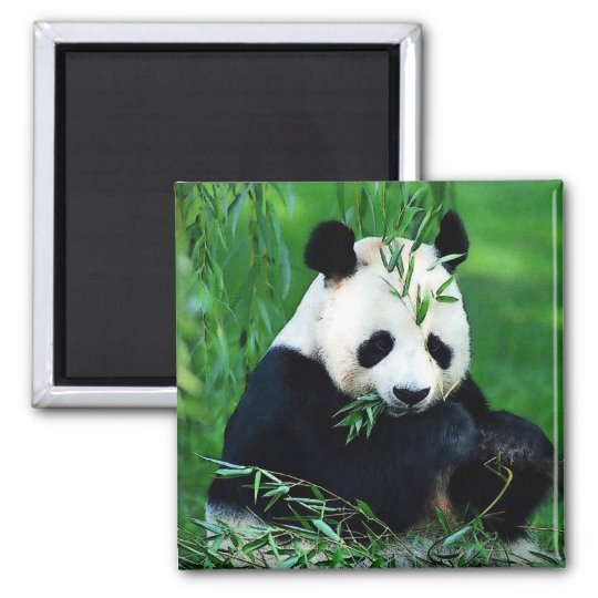 Panda Eating Leaves Magnet